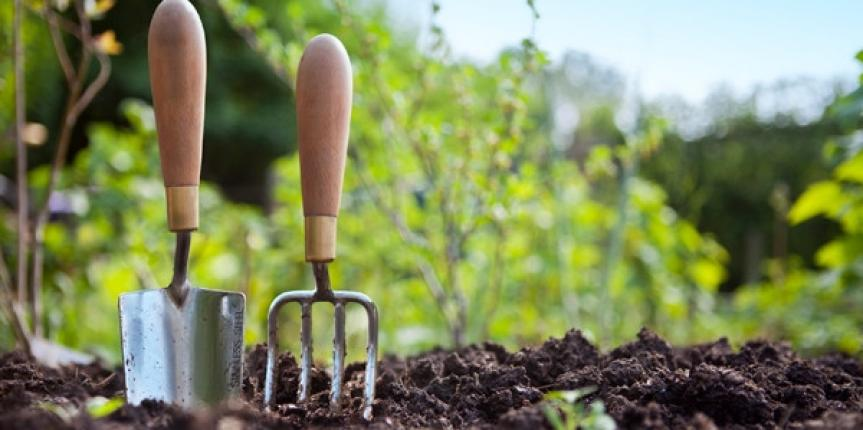 Healthy Gardening Tips You Can Easily Use