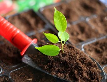 Gardening Mistakes – How To Avoid The Most Common Ones